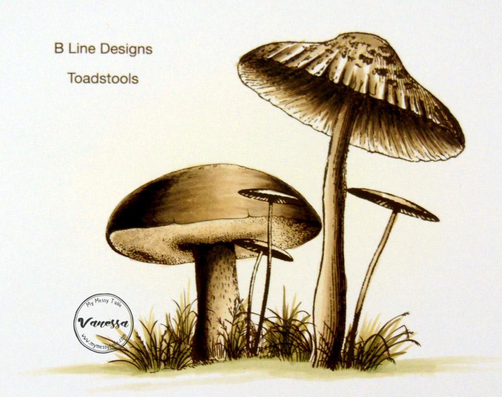 VanR-Cogumelos